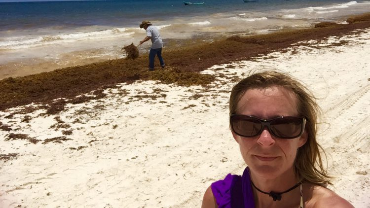 worker cleans beach behind me as the problem of sargassum in the caribbean grows each year