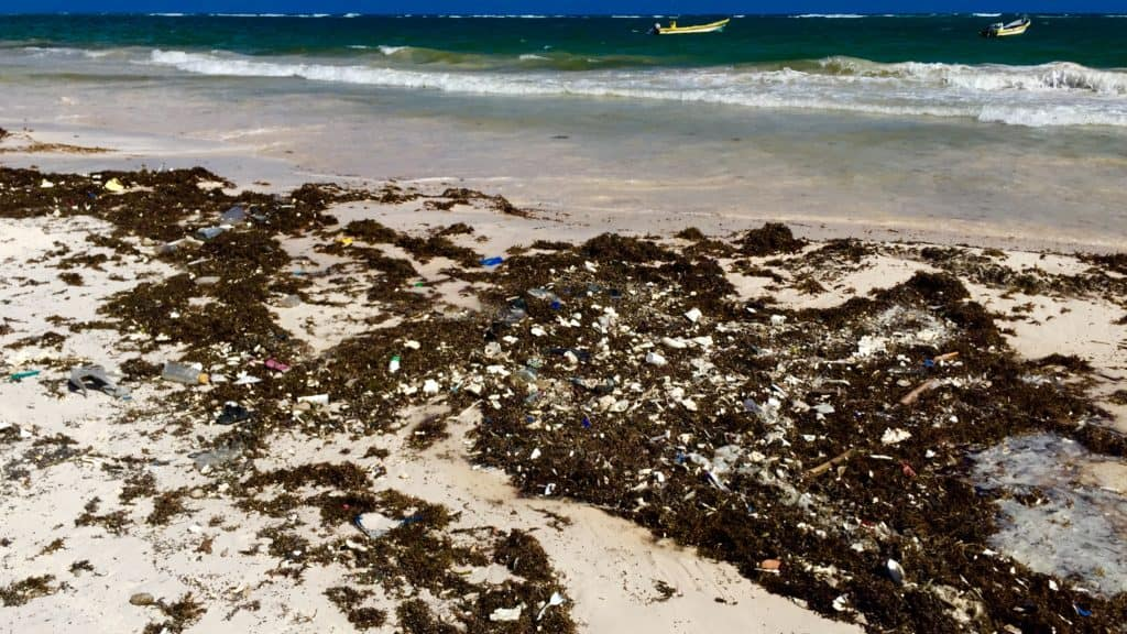 sargassum and plastic on a beach with waves in the background
