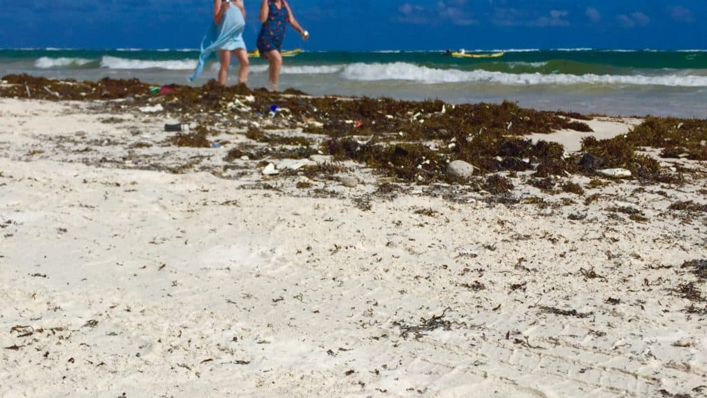 two women walk along shore with sargassum and plastic trash