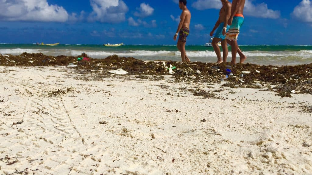 three people walk by plastic trash stuck in sargassum in tulum, mexico