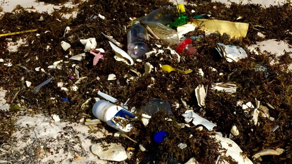 close up of plastic trash in sargassum on a beach