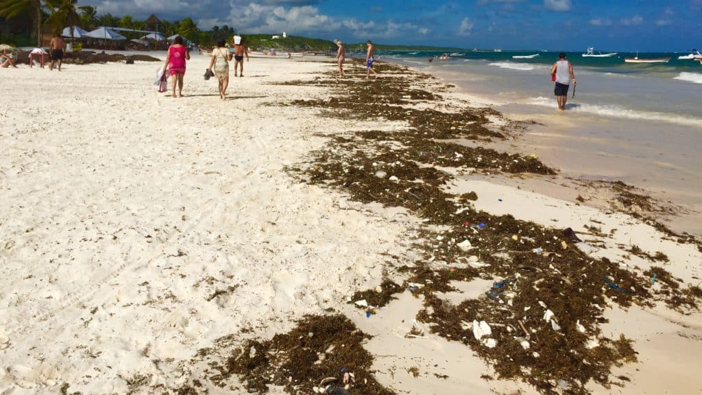 tulum beach with sargassum and plastic trash