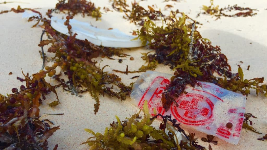 plastic food containers washed up on a beach with sargassum