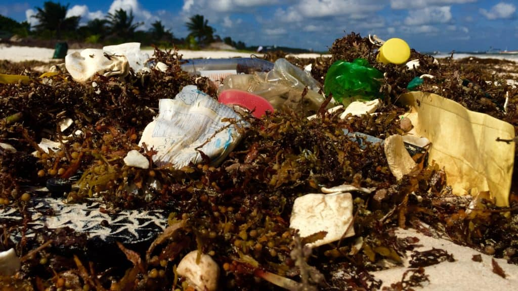 plastic trash wrapped up in sargassum