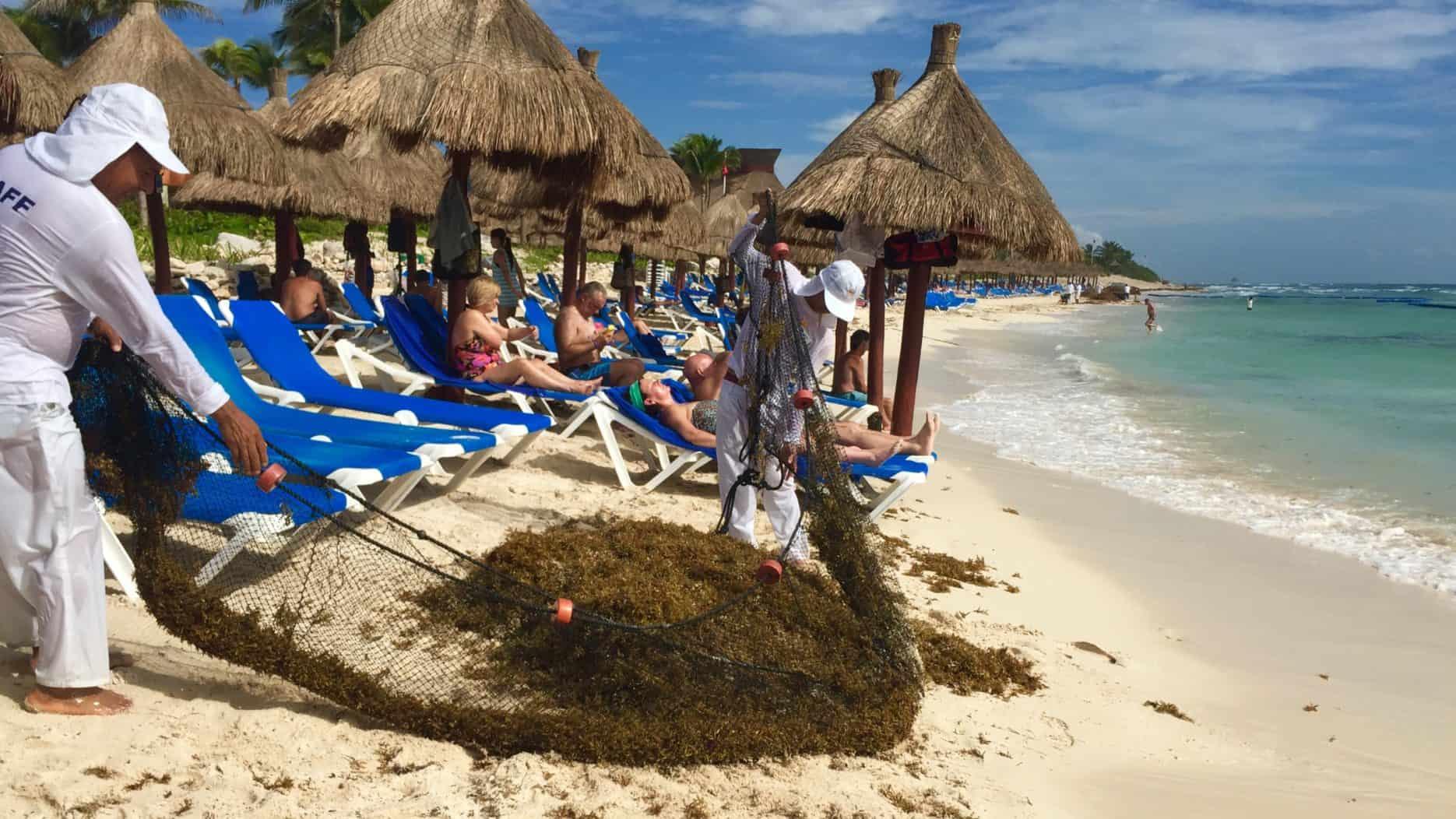 sargassum in the caribbean hotel problem