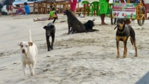Unlucky stray dogs in Mexico
