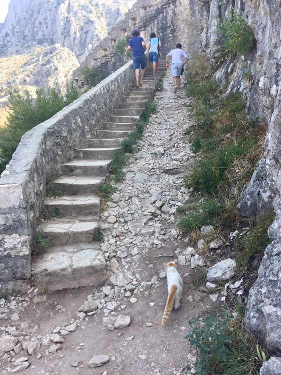 some of the old stone steps that lead to the amazing views from kotor castle ruins