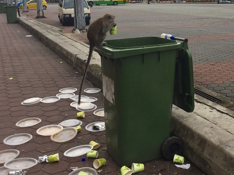 a monkey sits on a garbage can outside the batu caves entrance