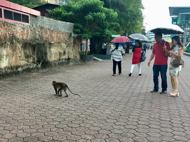 people walk by a monkey at the batu caves entrance area