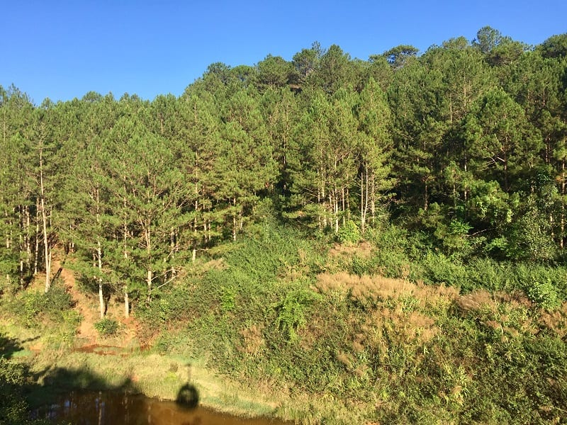 a view of the pine forest from the dalat cable car