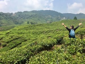 A man stands among tea trees at a tea plantation in the Cameron Highlands of Malaysia.