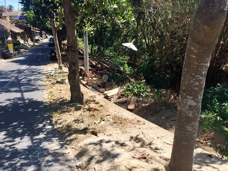 a white heron flies near a street in the so-called 'bird village'  -- one of the sites near ubud