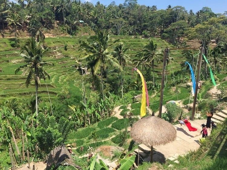 a woman in a red dress on a swing is contrast against green rice terraces at Tegallalang - one of the sites to visit near ubud