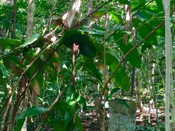 The tiny face of a tarsier primate is just visible in the sunlight at a conservation center on Bohol Island.