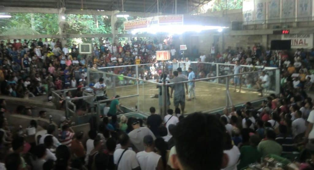 cockfighting in the philippines