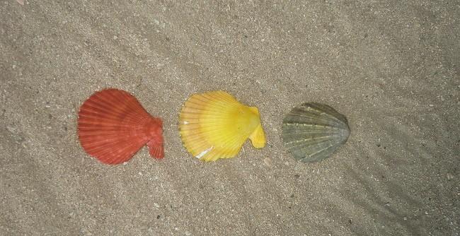 3 shells from gigantes norte island