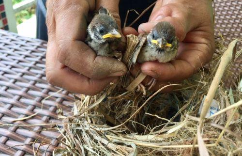 Edenia holding baby chicks