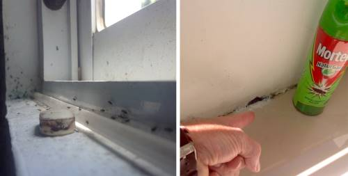left andts on a window sill, right bug spray