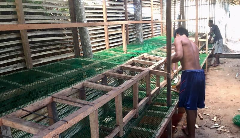 the chicken order for the ati henhouse will fill these cages with egg-laying chickens to provide income for the indigenous tribe.