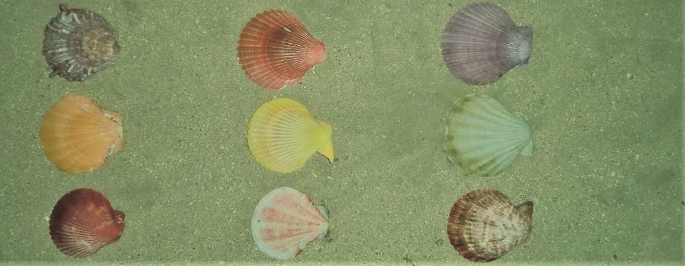 nine colorful shells on a beach