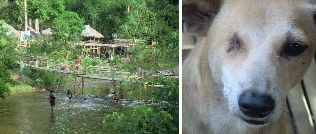 Left, kids playing in the river while women wash clothing; right, a friendly one-eyed dog.