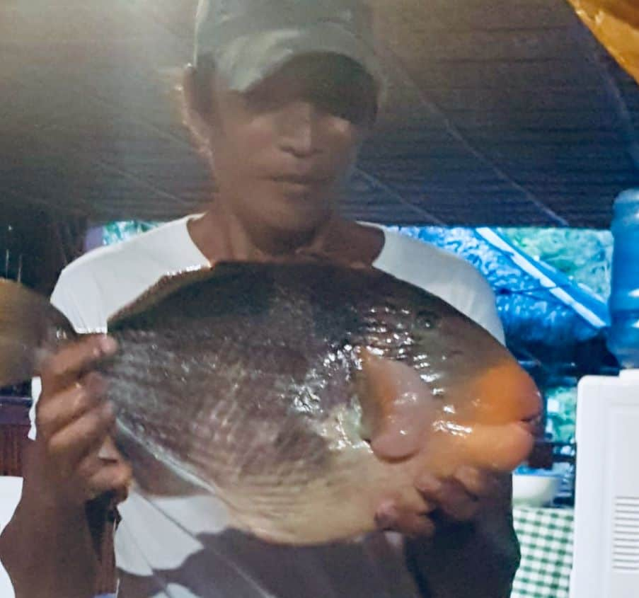 triggerfish and tourism