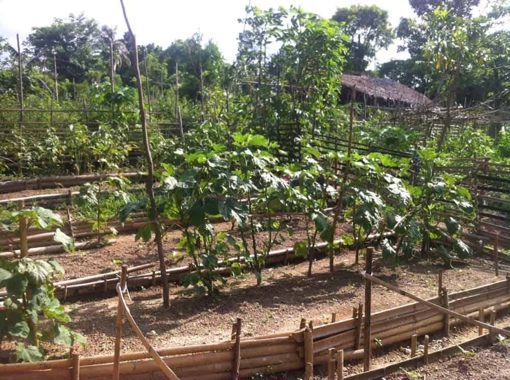 An Ati garden in Carla Village, Malay, Aklan, Philippines.