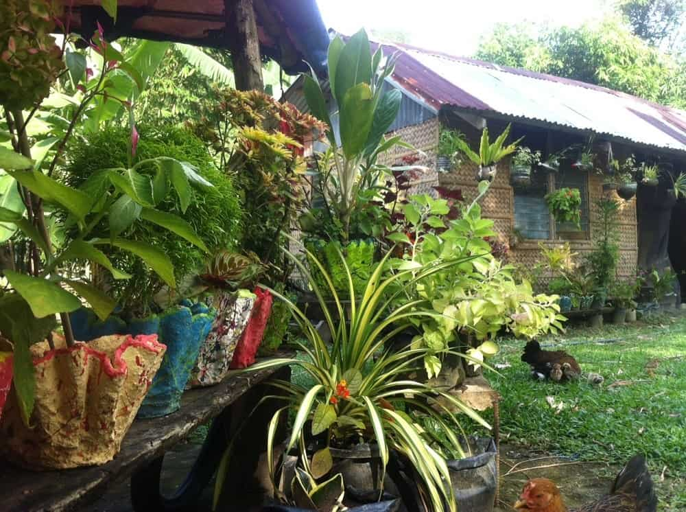 Beautiful ornamental plants at a Philippine home in Malay, Aklan.